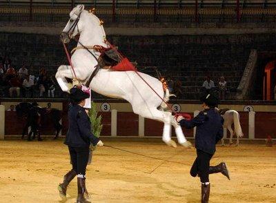 Jerez de la Frontera, Como bailan los caballos andaluces 2013
